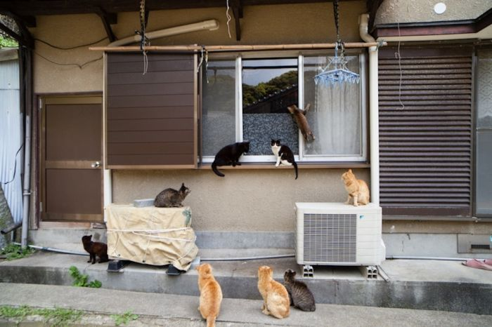 Cat Heaven Island in Japan