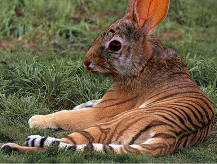 Hilarious Animal Manipulations