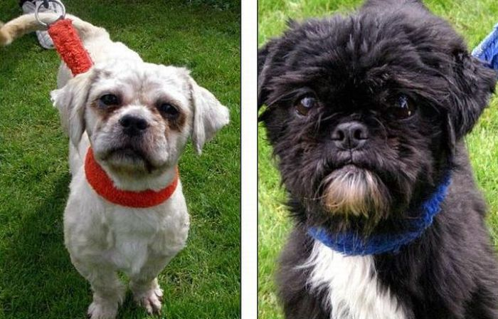 Dogs Before and After the Adoption