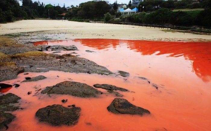 Red Beaches in Sydney, Australia