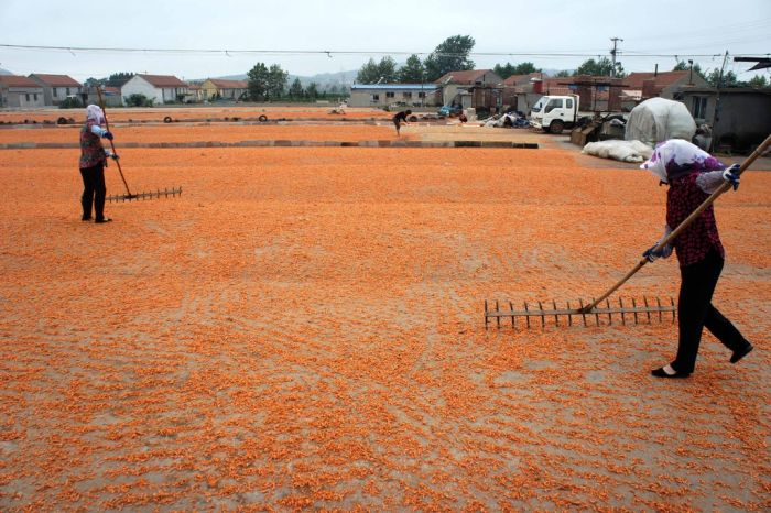 Shrimp Factory in China