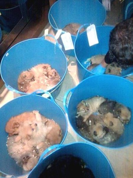 Puppy Smugglers Arrested