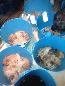 Puppy Smugglers Arrested