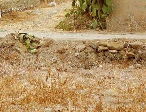 Invisible Cat. Can You Find It?