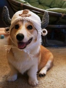 Corgnelius the Corgi