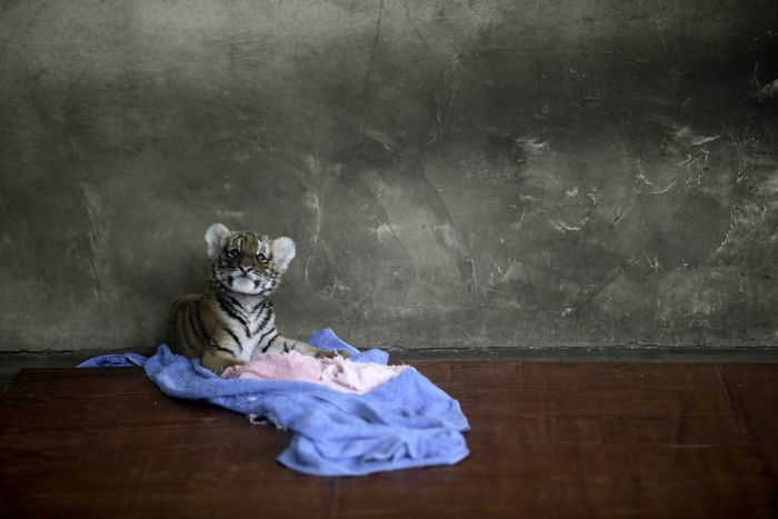 The Best Animal Photos Of 2012, part 2012