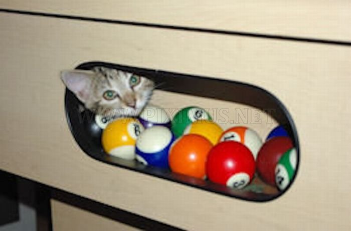 Cute Cats In Pool Tables