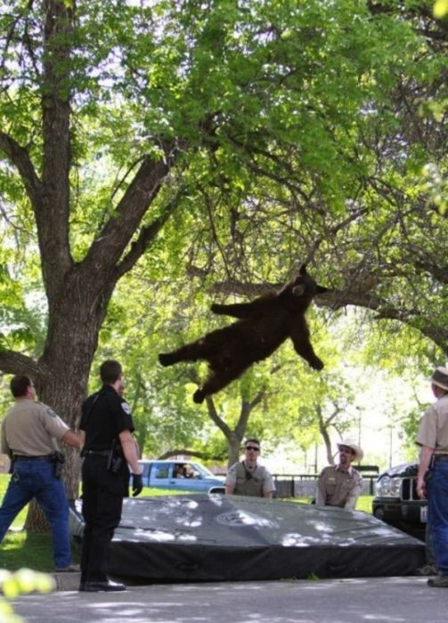The Most Perfectly Timed Photos Of 2012, part 2012
