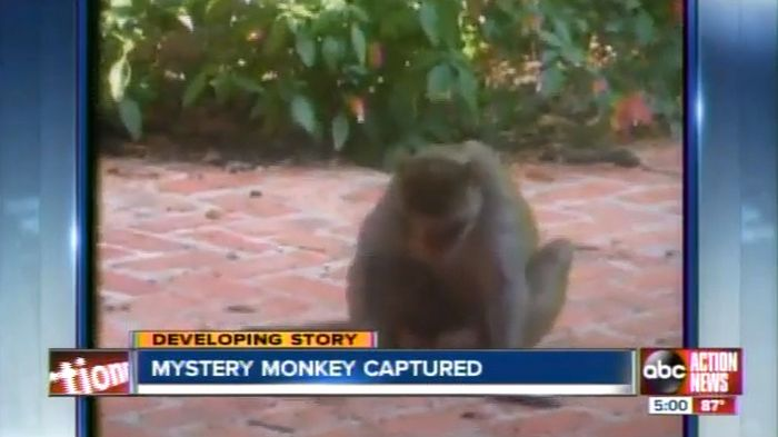 These Crazy Things Happened in Florida in 2012, part 2012