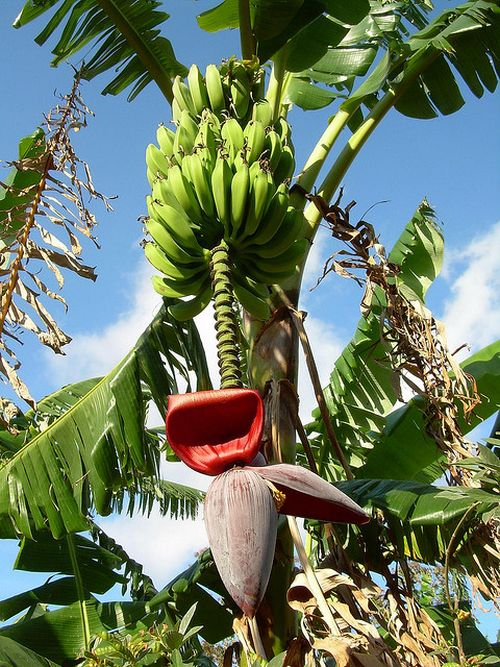 This Is Where Our Fruits Come From