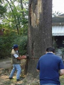 Tree Cutting Fail