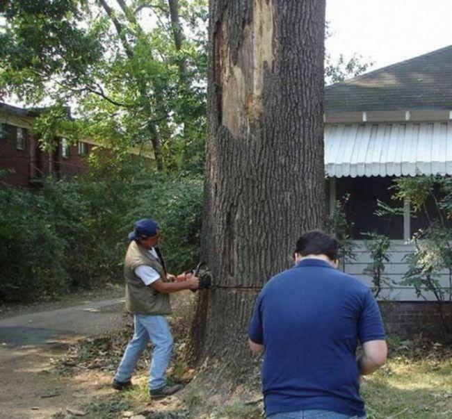 Tree Cutting Fail