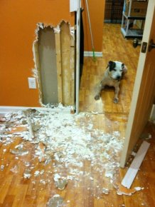 House Remodeled by a Dog