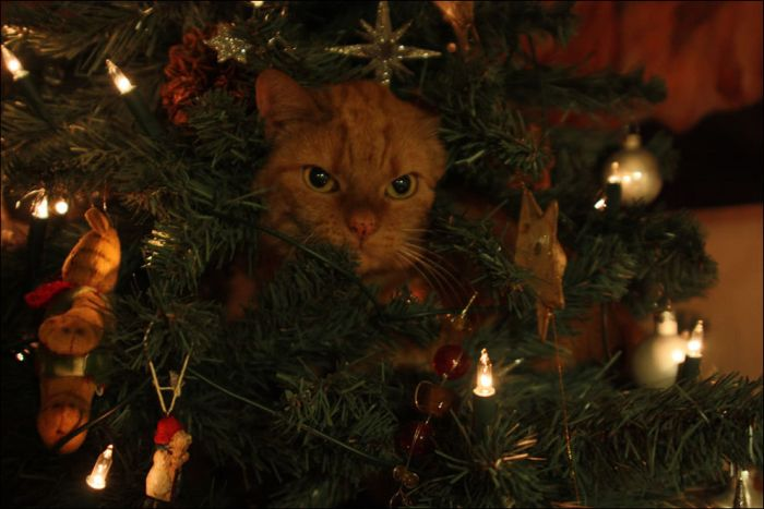 Cats Love Christmas Trees | Animals