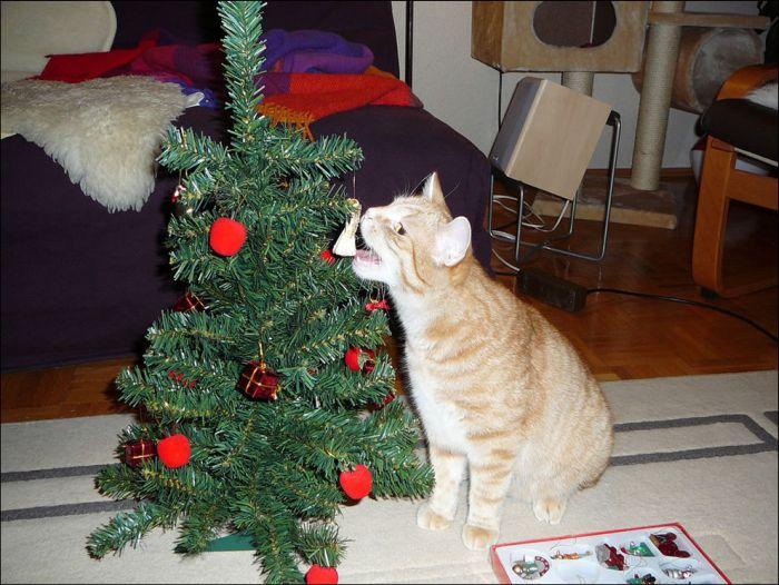 Cats Love Christmas Trees