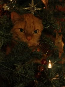 Cats Love Christmas Trees