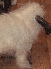 Awesom Dog GIFs