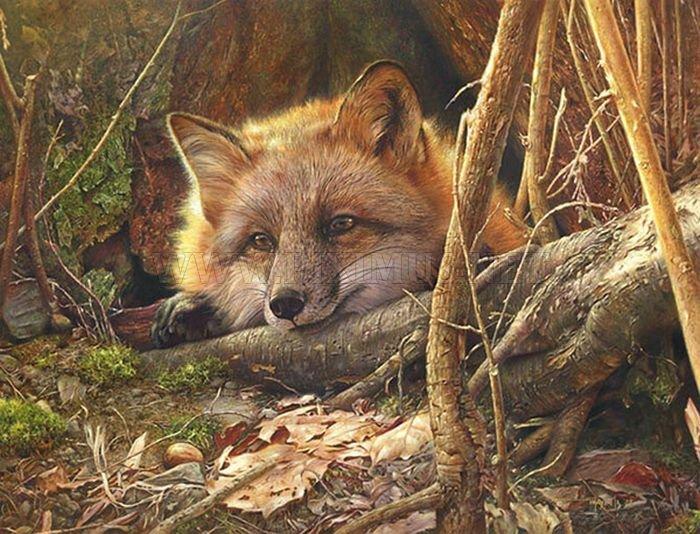 Stunning Wildlife Paintings by Denis Mayer Jr.