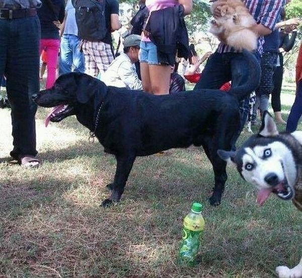 The Best Photobombs Of 2012, part 2012