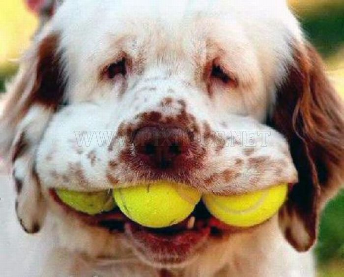 Dogs with Tennis Balls