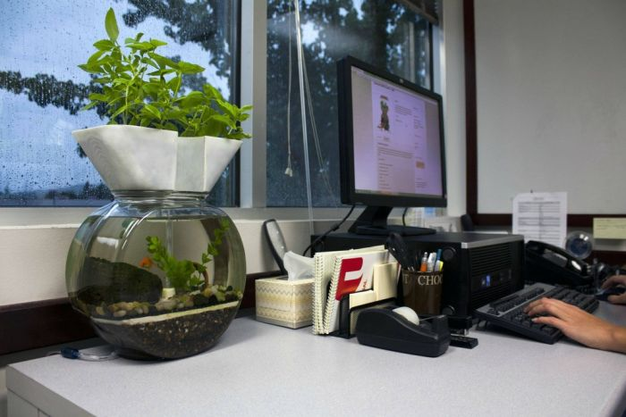 Self-Cleaning Aquaponic Aquarium
