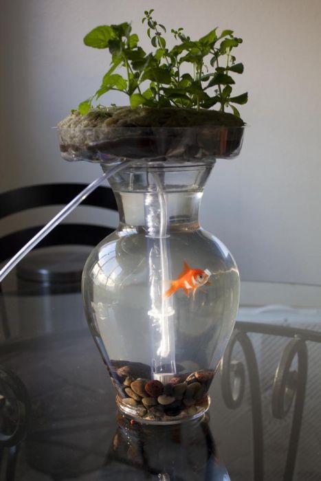 Self-Cleaning Aquaponic Aquarium