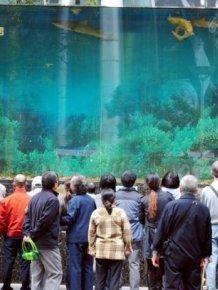 Shark Aquarium Accident