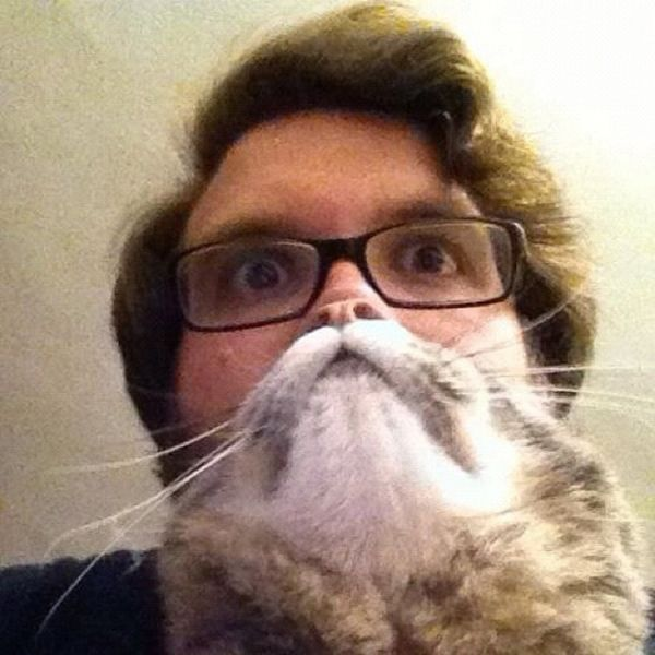 Perfectly Timed Cat Photos