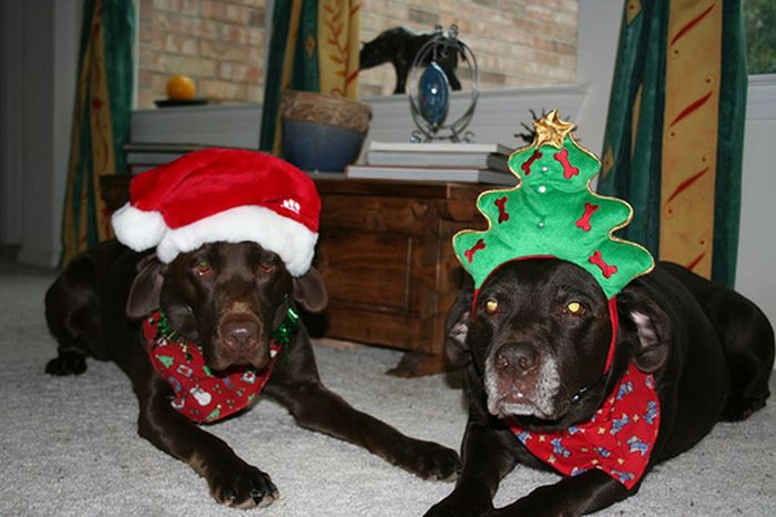 These Dogs Hate Christmas