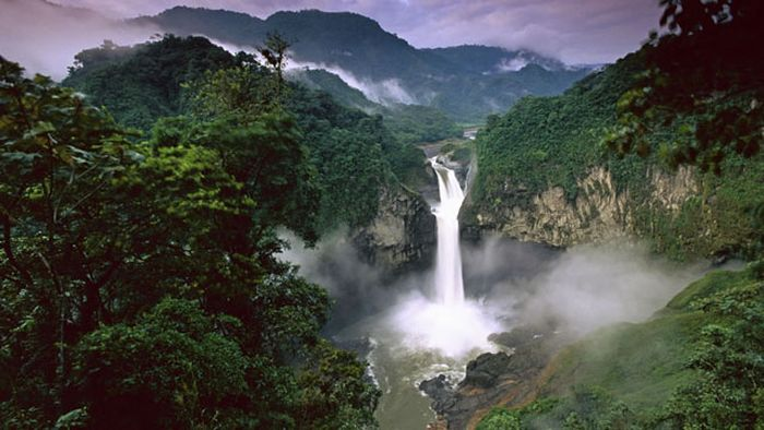 The Beauty of Amazon Forest