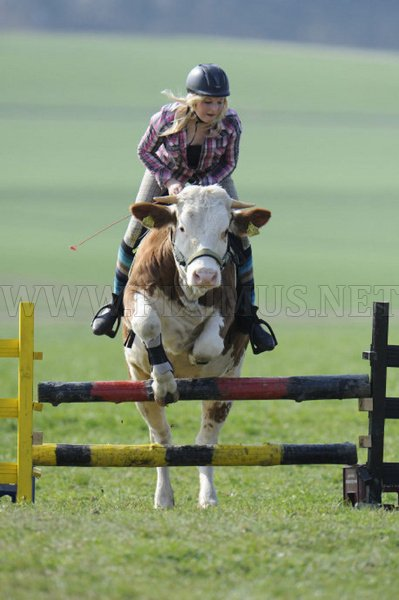 Luna - The leaping cow