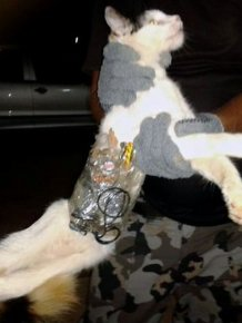 Smuggler Cat