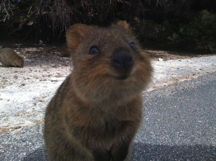 Cute Little Animal