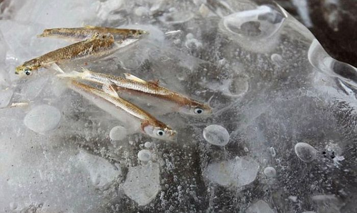 Real Ice Fishing