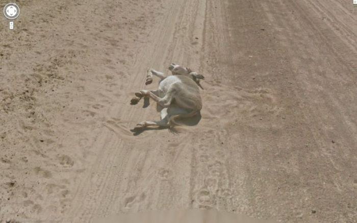 "Google Street View Donkey ""Accident"" in Botswana"