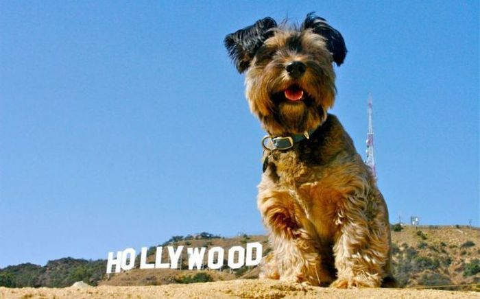 Oscar the Traveler
