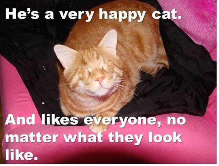 Minik the Wonder Cat