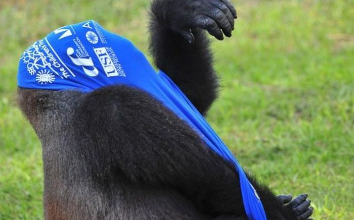 Gorilla vs T-Shirt