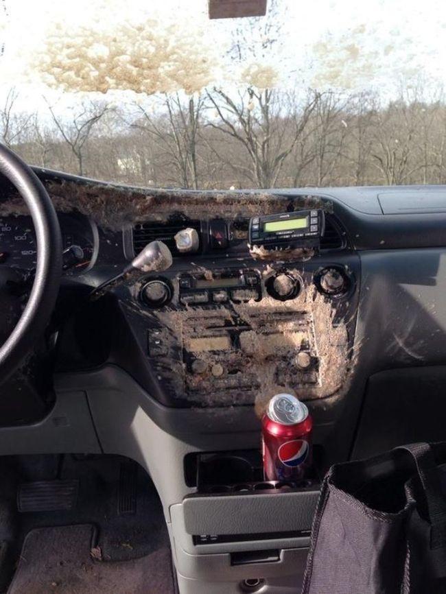 Can of Soda Inside a Frozen Car