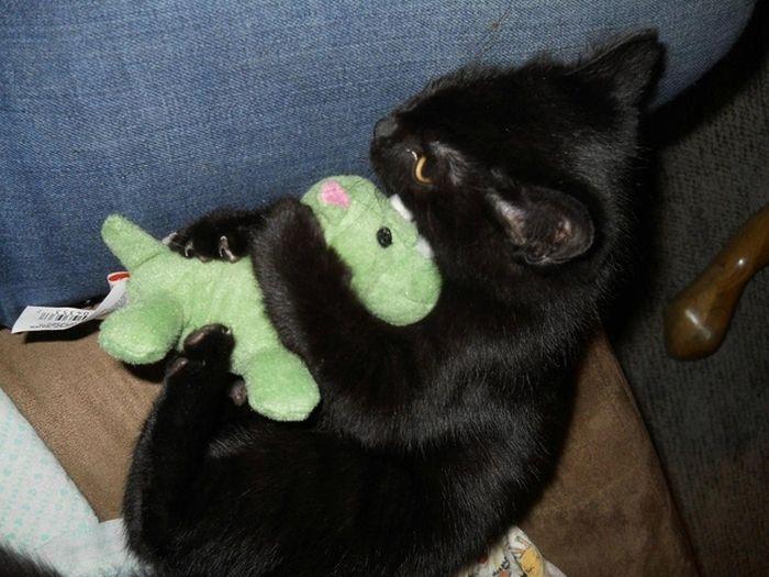 Stuffed Animals Wild Cats