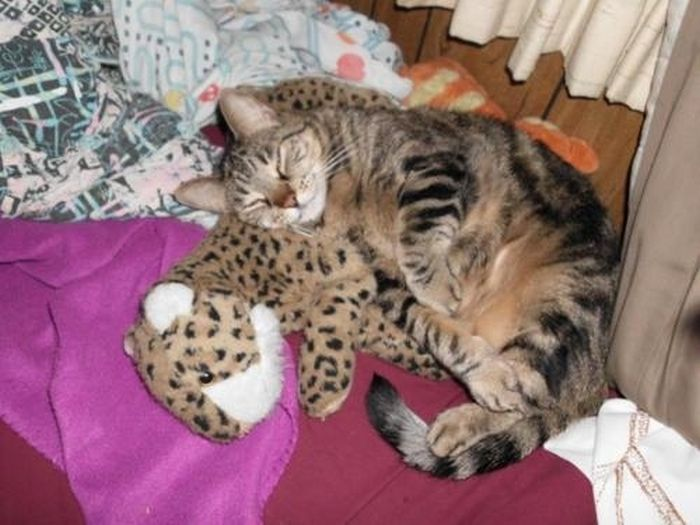 Cats with Stuffed Animals