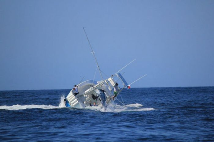 Fish vs. Boat Battle