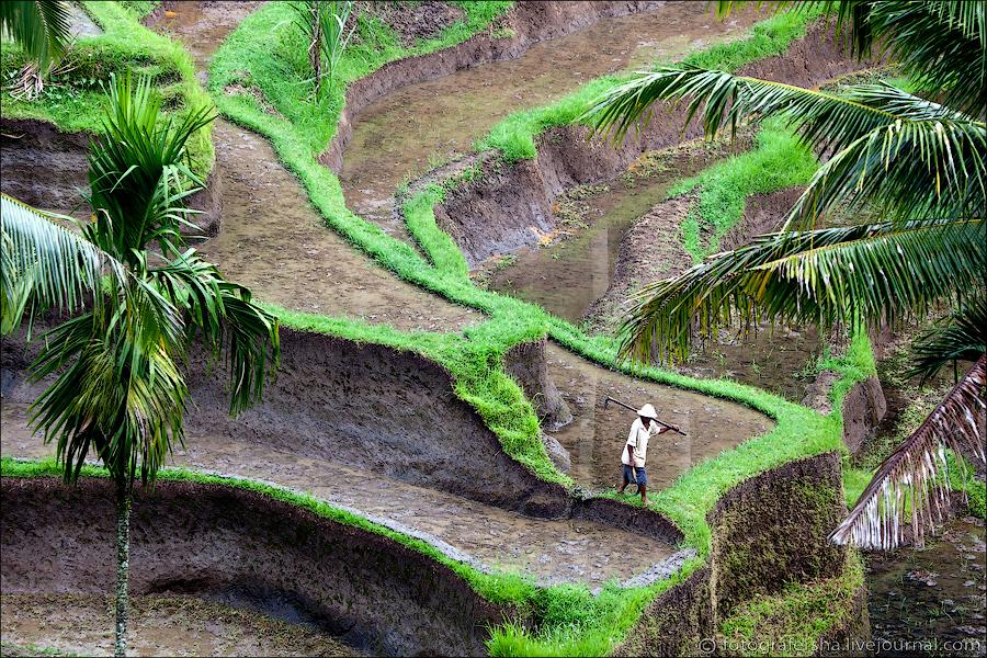 Balinese rice fields
