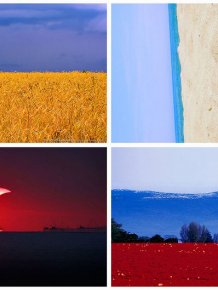 State flags in nature