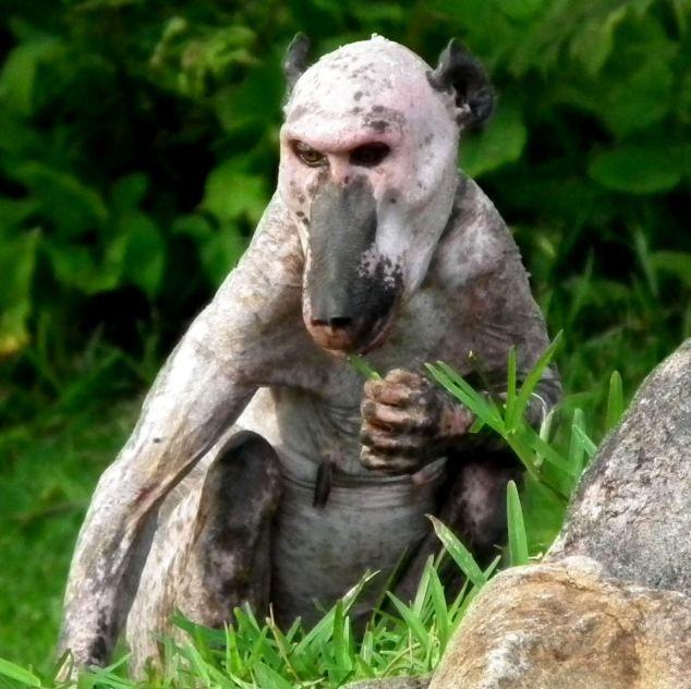 Bold Baboon