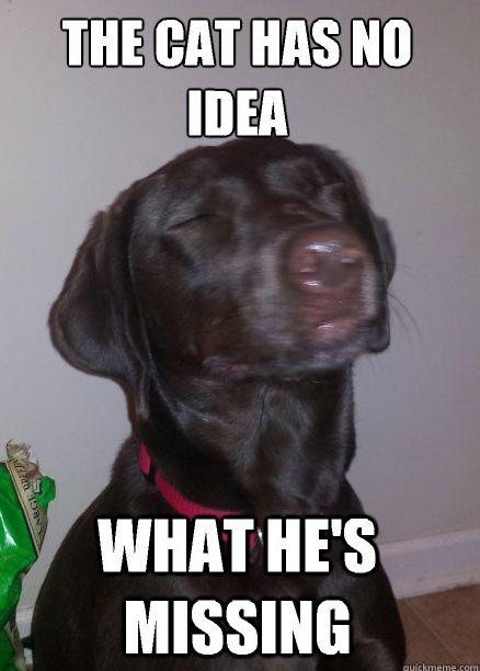 Funny Dog Memes