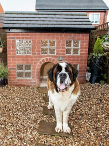 Dog Lives in a Replica of His Owner's House