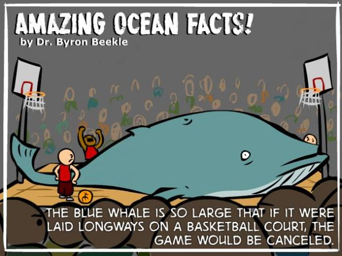Interesting Ocean Facts | Others