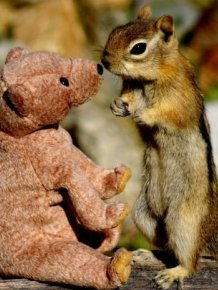 Chipmunk in Love with a Teddy Bear