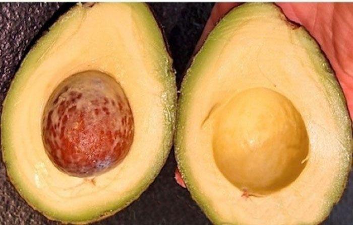 How to Buy a Good Avocado
